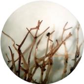 клетъчно обновяване