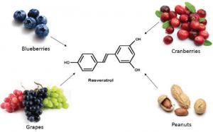 РЕСВЕРАТРОЛ -мощен антиоксидант